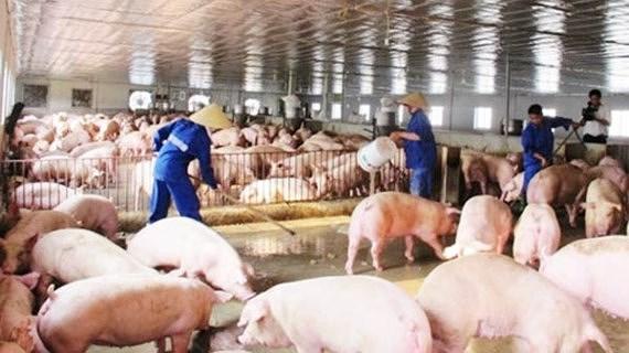 Kế hoạch bảo vệ môi trường trong chăn nuôi